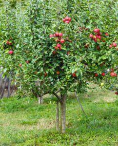 obstbaeume-im-garten-sorten-einpflanzen-und-pflege
